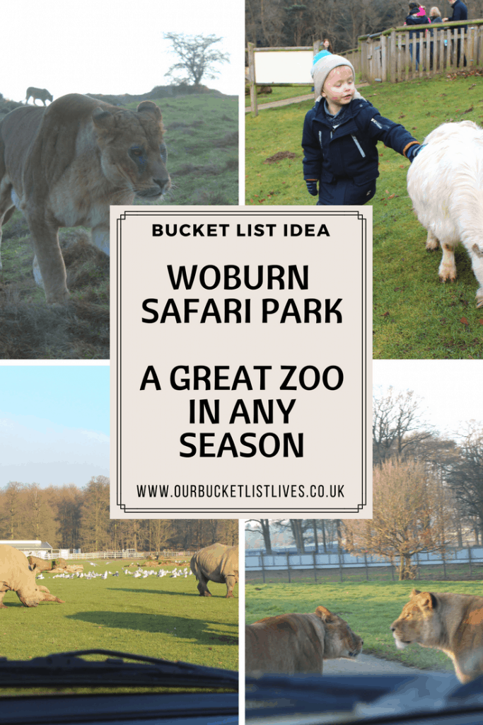 woburn safari park - a winters day out review