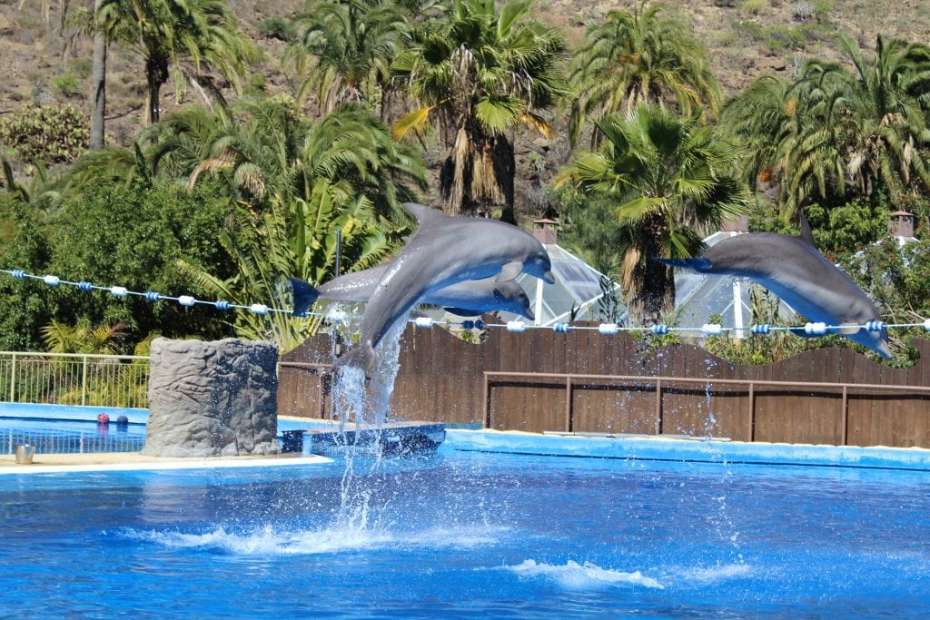 Top 12 things to do with kids in Gran Canaria