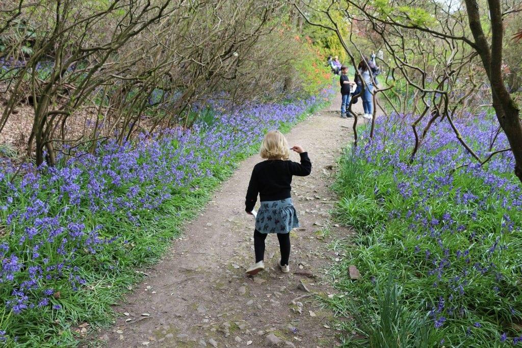 Riverhill Himalayan Gardens, Sevenoaks Bluebells