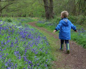 Tattershall Carrs Woods Woodland Trust Bluebells