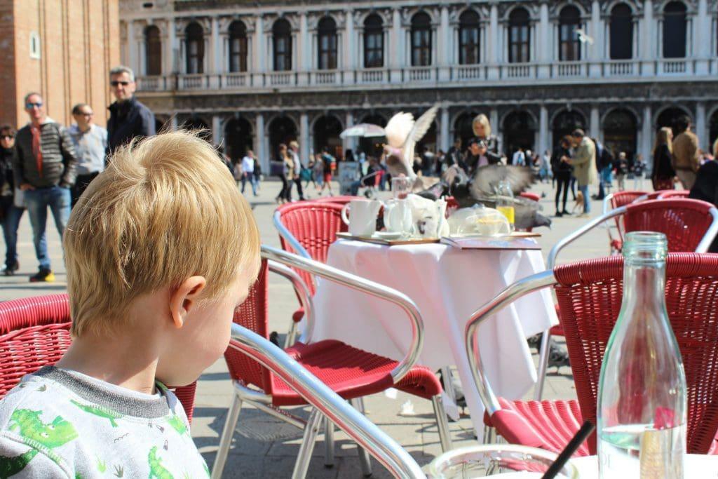 Pigeons Robbing Food Piazzo San Marco