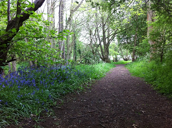 The Green Caravan Park. Photo of the bluebells