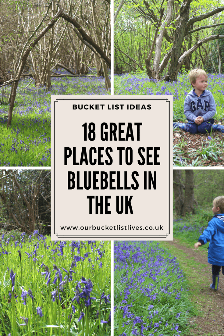 18 Great Places to see Bluebells in the UK - Wood Walks and More