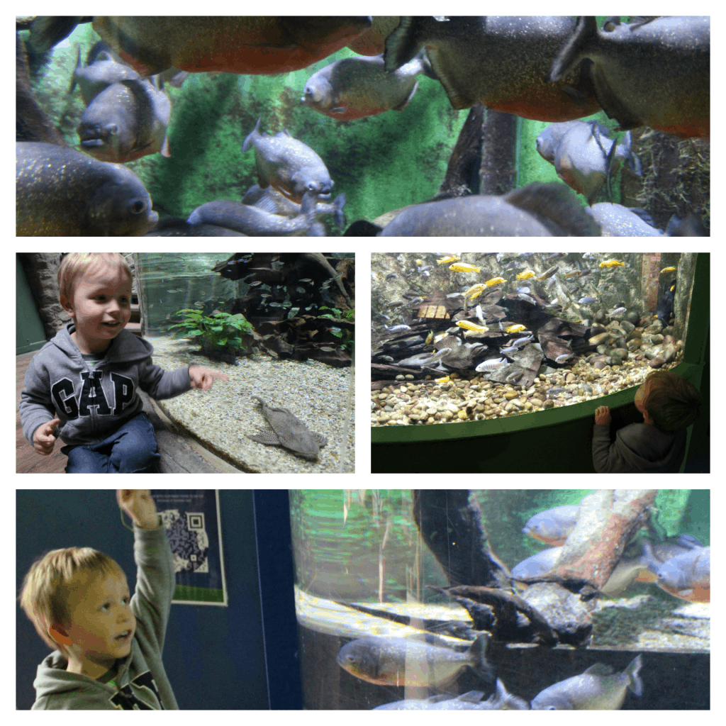 Oceanarium-Bournemouth-Review-Family-Friendly-Attraction