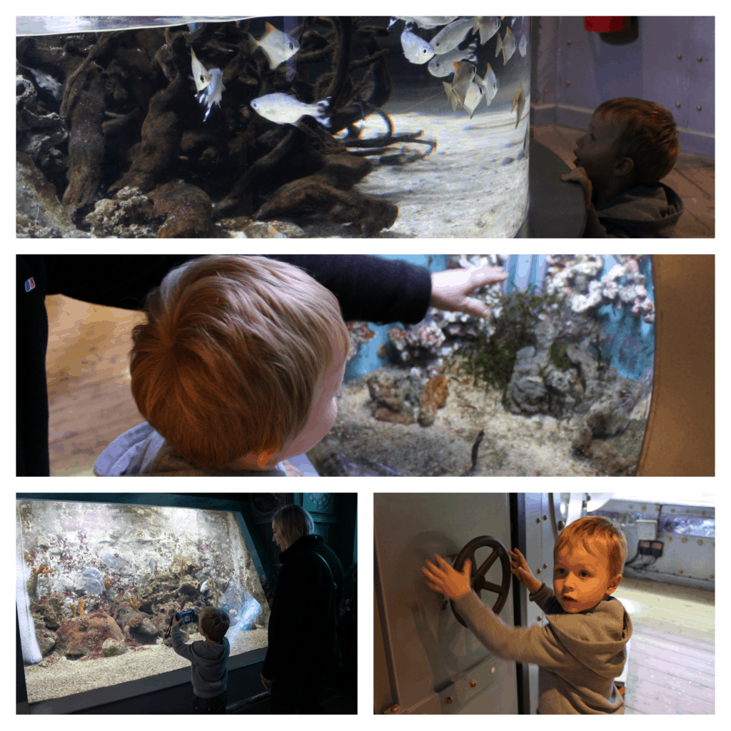 Oceanarium-Bournemouth-Family-Friendly-Attraction-Review