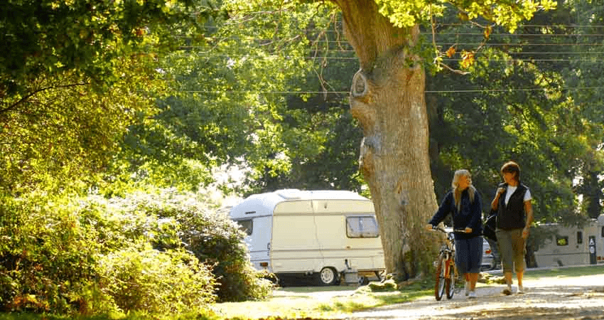 Hollands Wood campsite in new forest