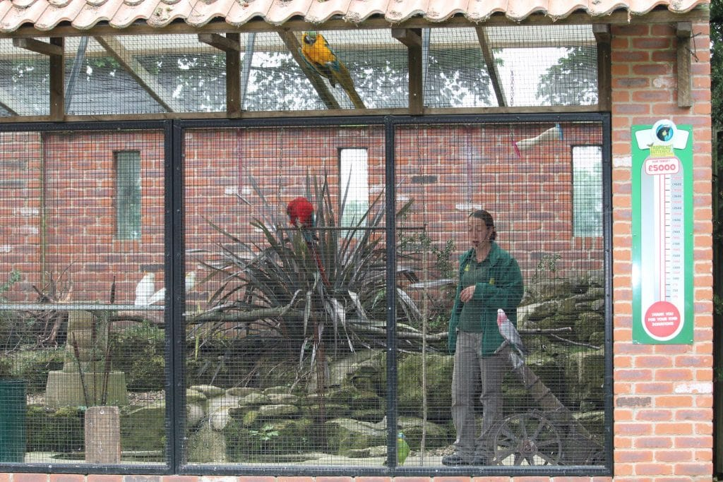 Tropical Butterfly House, near Sheffield - 15 Top Things To See and Do