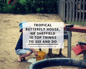 Tropical Butterfly House, near Sheffield - 10 Top Things To See and Do