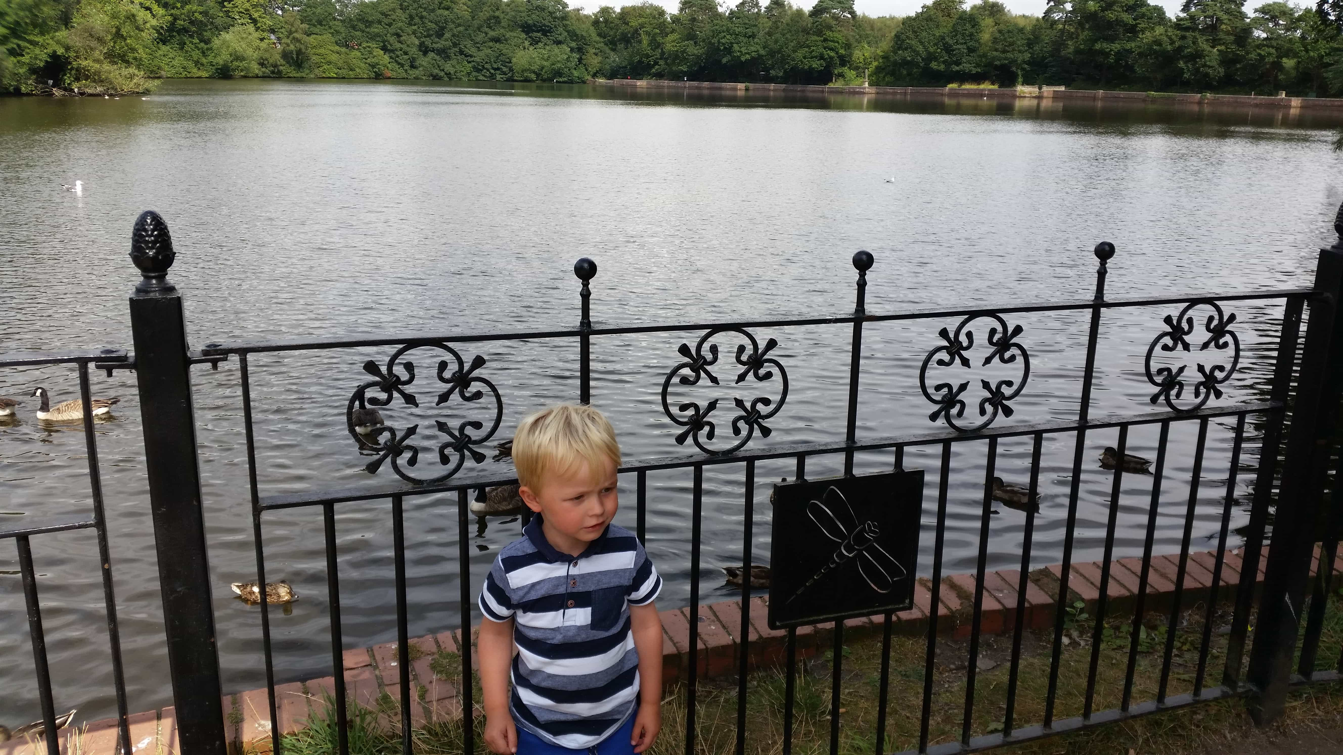 The large lake at Hartsholme
