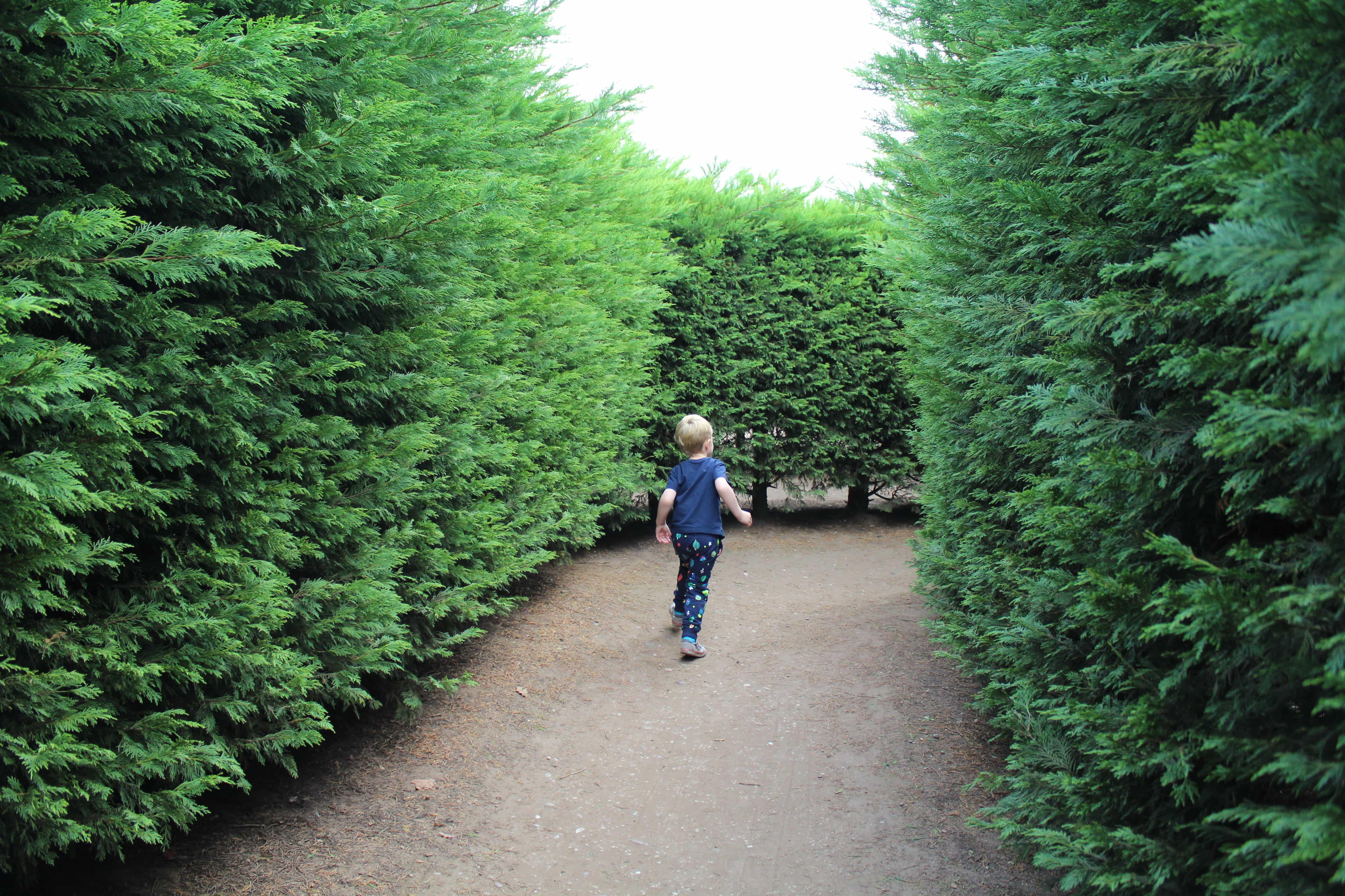 Inside Hexo Hedge Maze