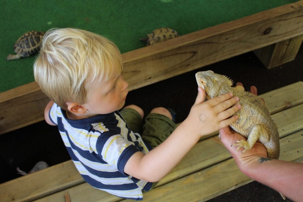 8 Great Things To Do at Tattershall Farm Park, Lincolnshire