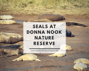 Seals at Donna Nook Nature Reserve - Tips & When to Visit