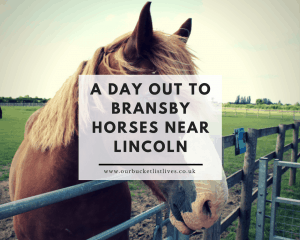A Day Out to Bransby Horses Near Lincoln | Free to Visit