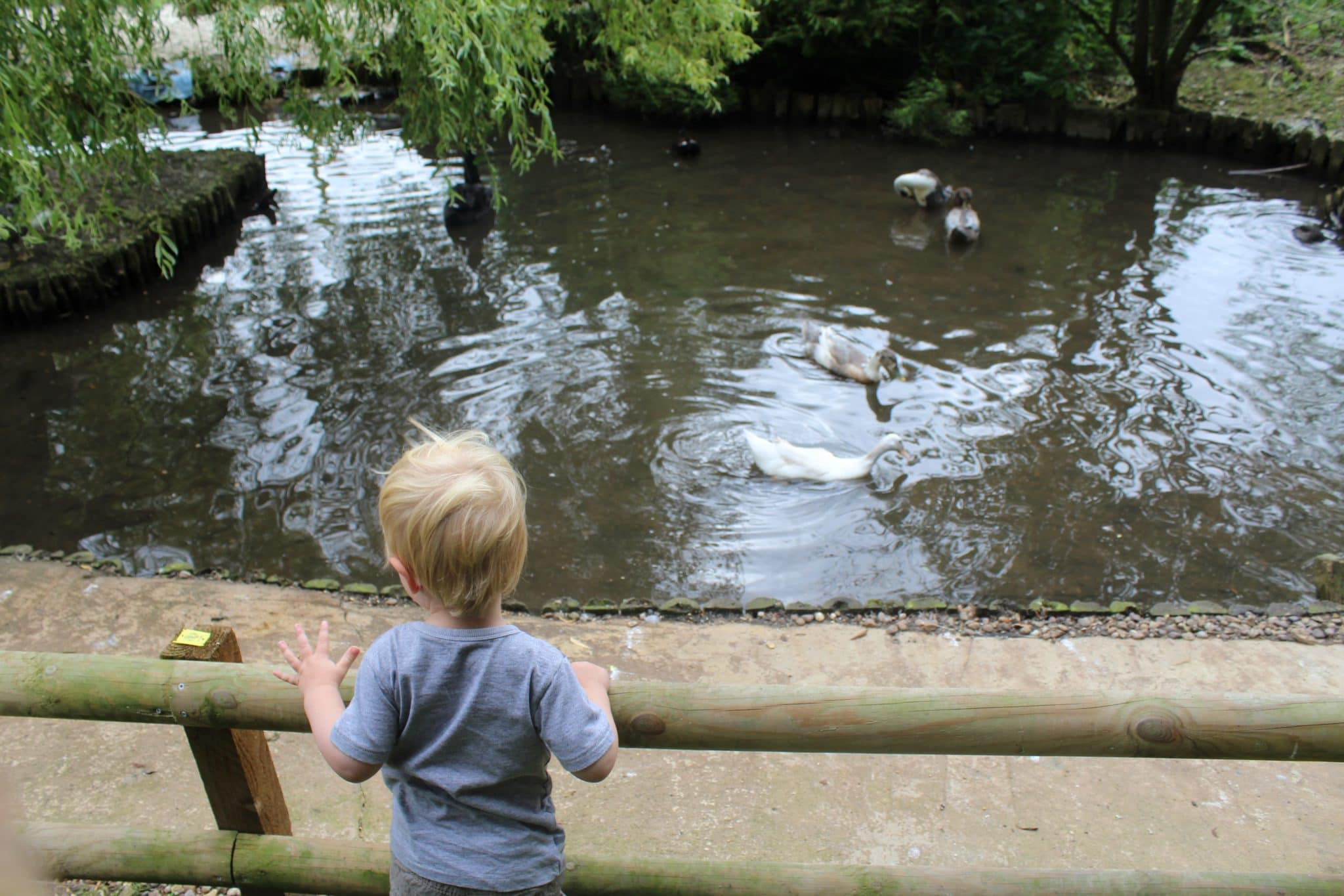 Claythorpe Watermill & Wildfowl Gardens - Day Out Lincolnshire