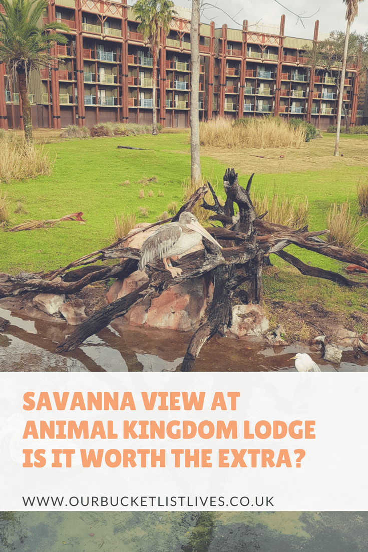 Savanna View at Animal Kingdom Lodge | Is it Worth the Extra?