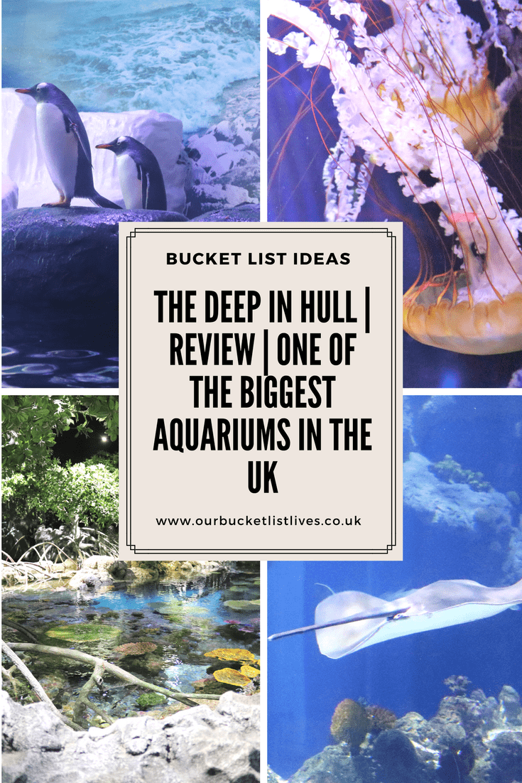 The Deep in Hull | Review of one of the Biggest Aquariums in the UK