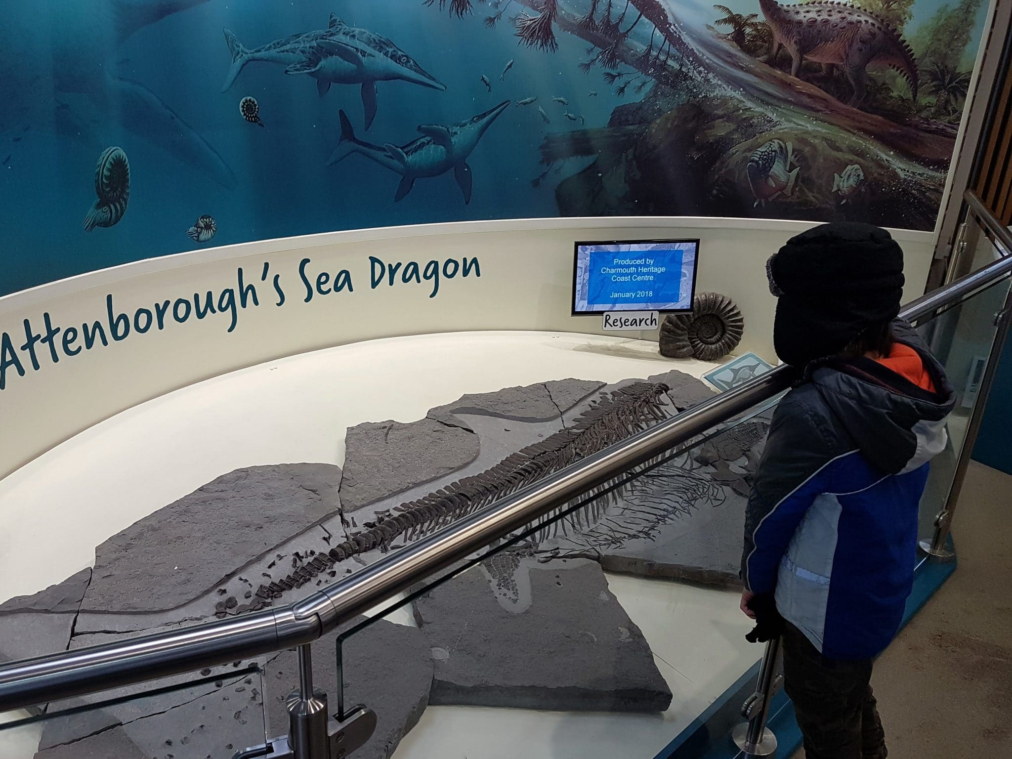 16 - Attenborough's Sea Dragon