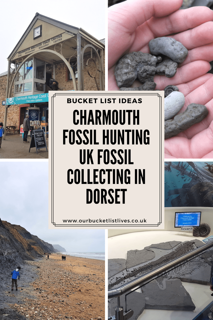Charmouth Fossil Hunting | UK Fossil Collecting in Dorset
