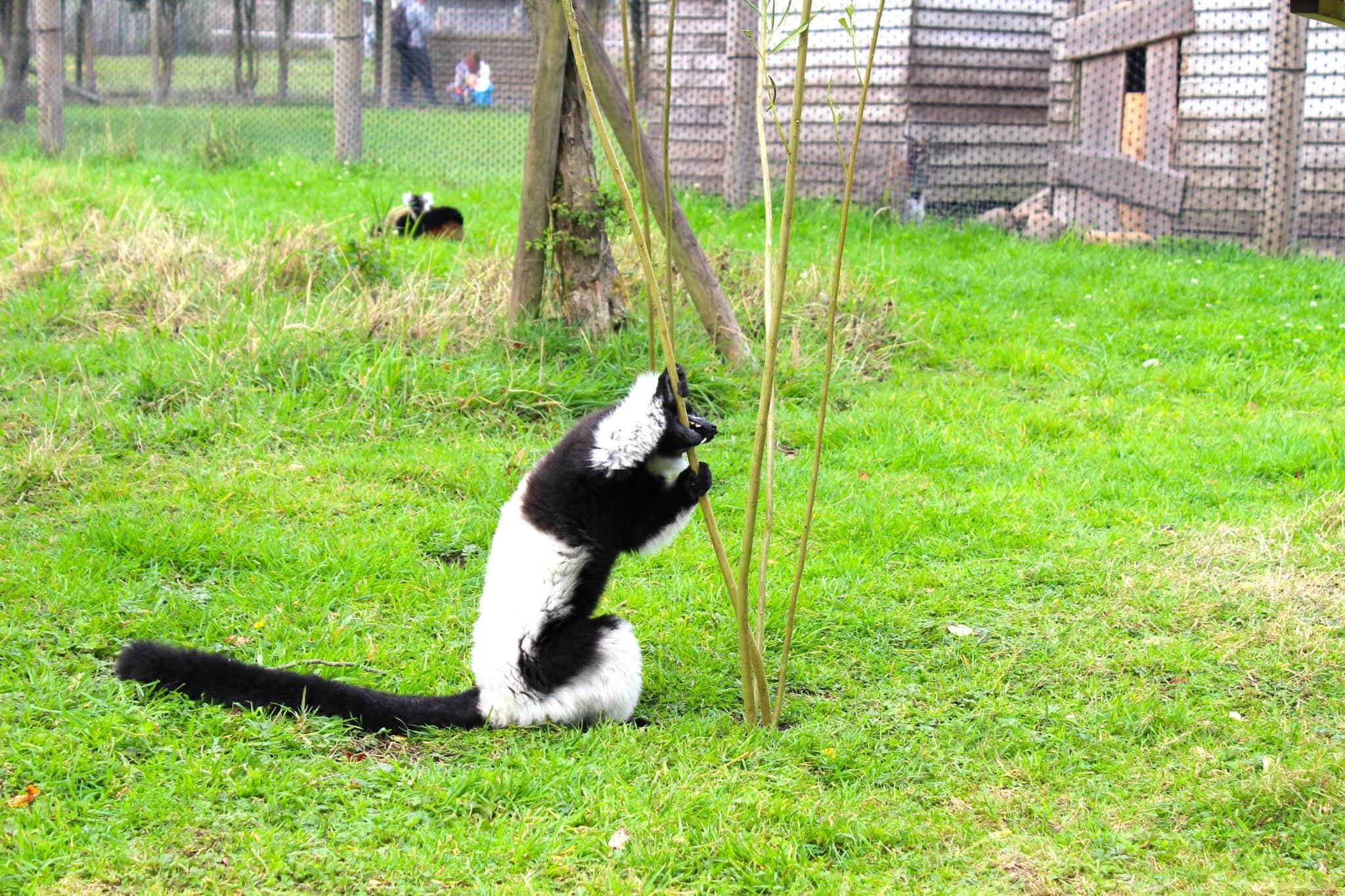In the Lemur enclosure