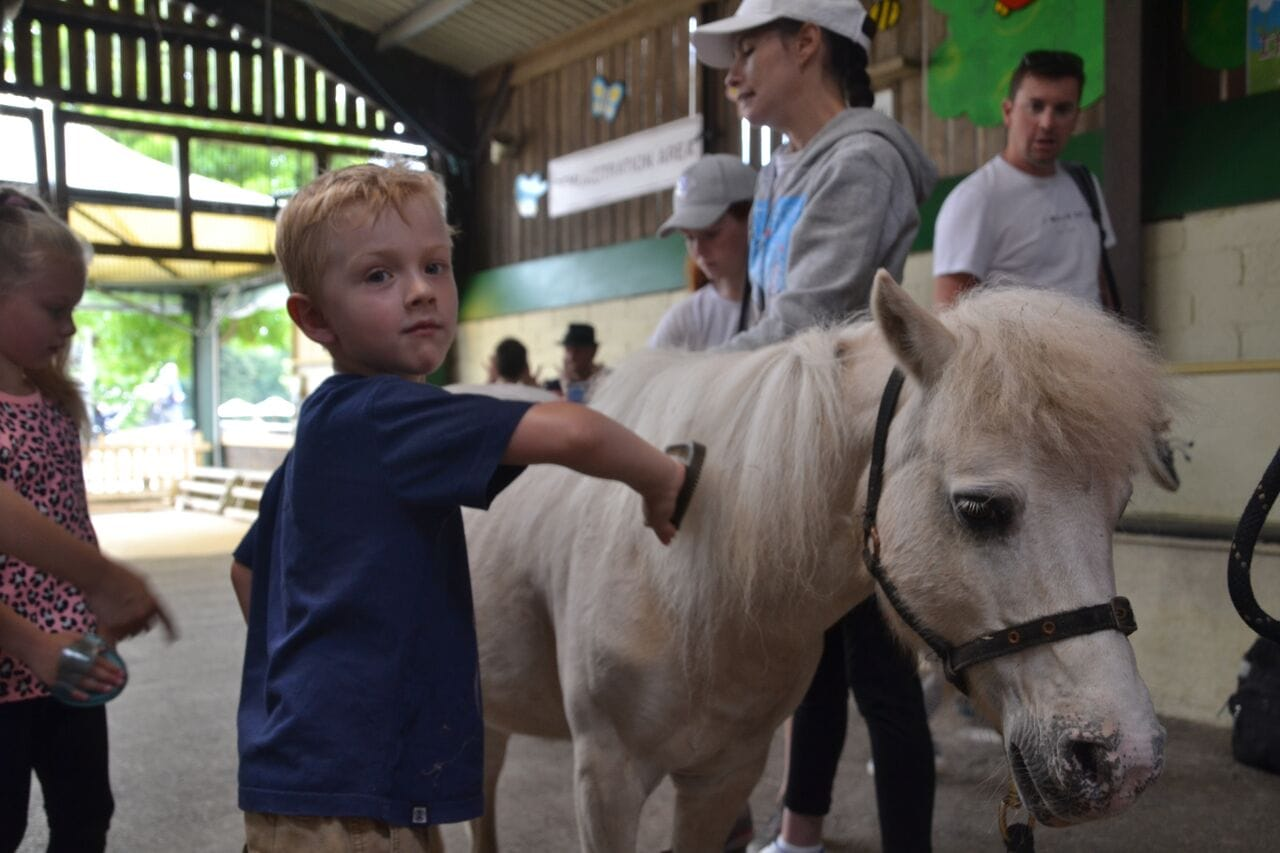 Pony brushing in the Animal Barn