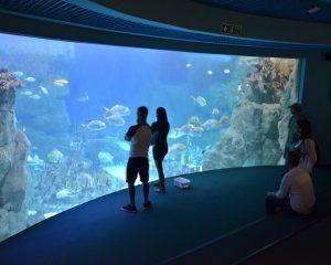 Great Barrier Reef tank