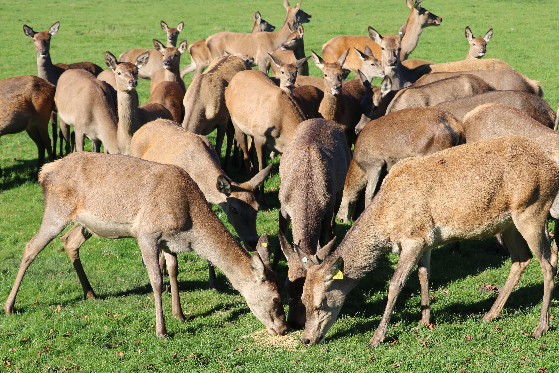 Deer Rut Safari & Pumpkin Trail at Stourton Estates
