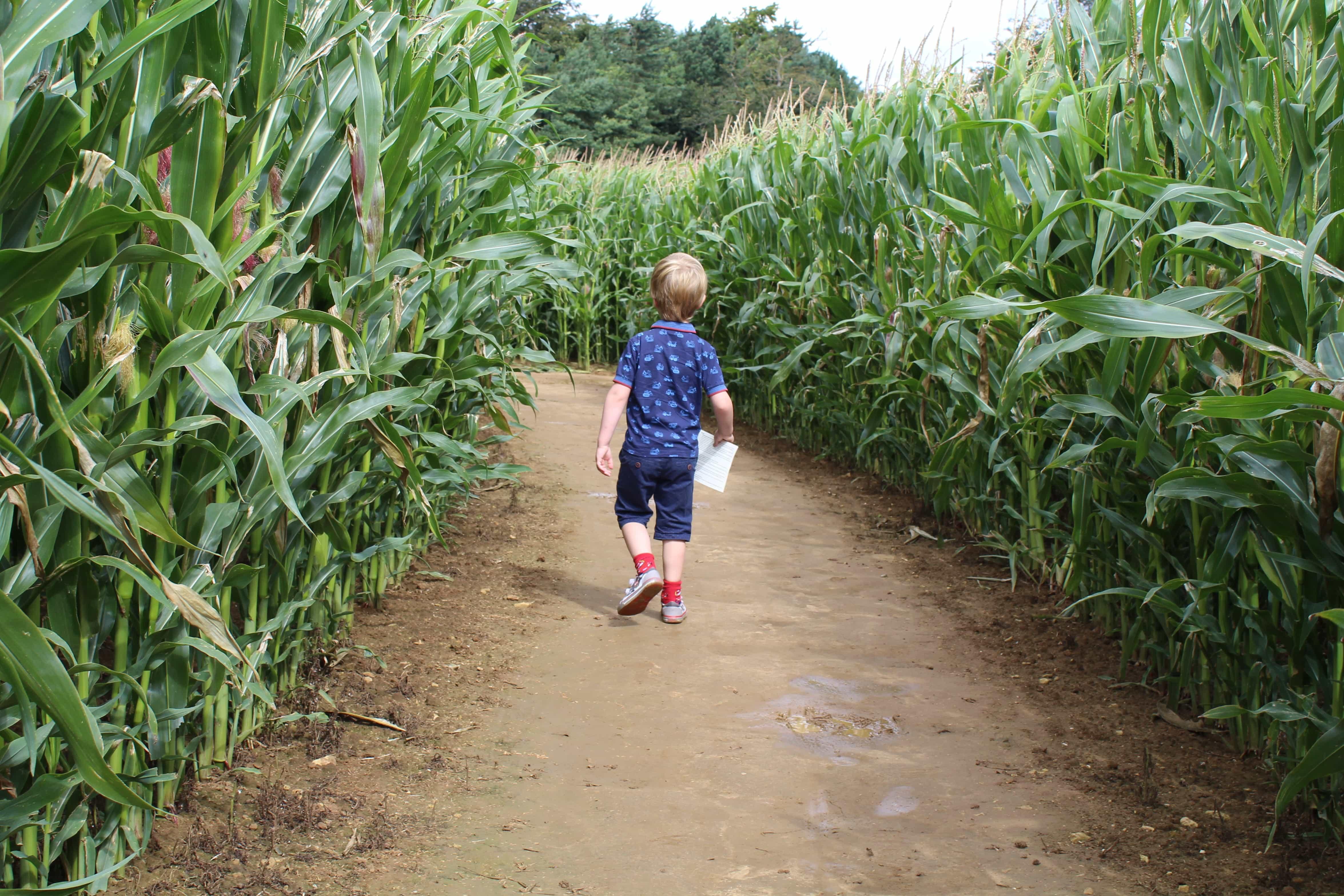 Uncle Henry's Maize Maze