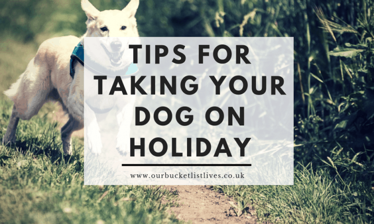 Tips for Taking Your Dog on Holiday