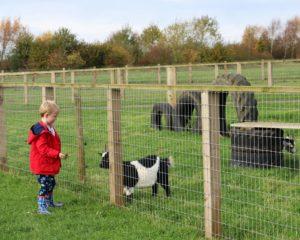 Pink Pig Farm Scunthorpe Review