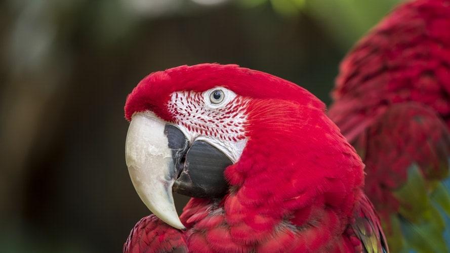Macaw of the Amazon Rainforest