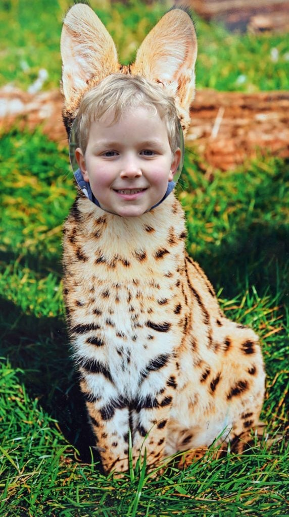 Fred as a Serval