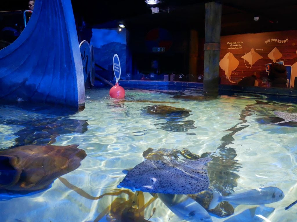 Scarborough Sea Life Sanctuary | Review