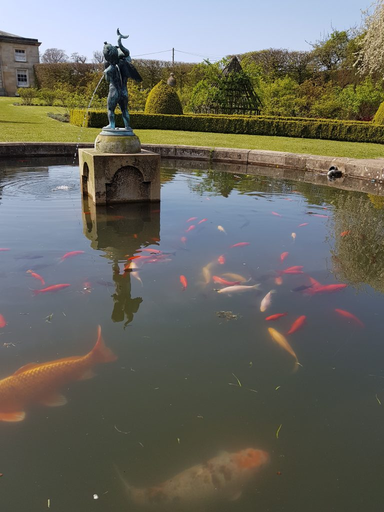 Look out for the fish in the walled garden