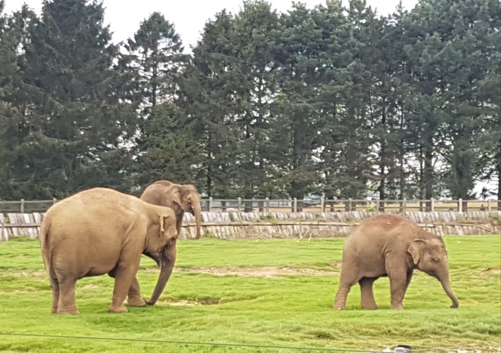 Elephants at Whipsnade