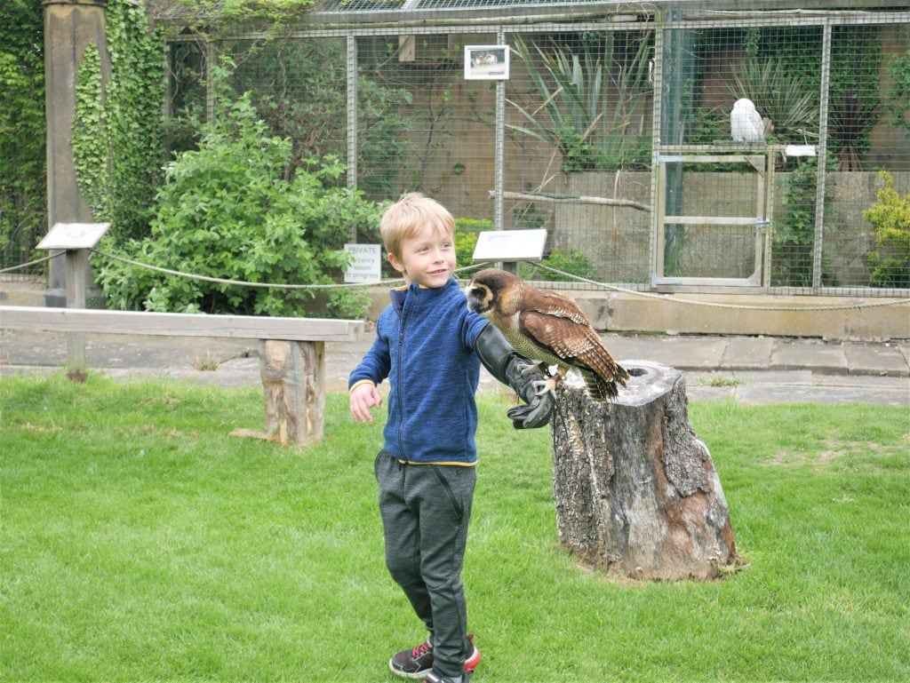 Birds of Prey Family Taster Experience