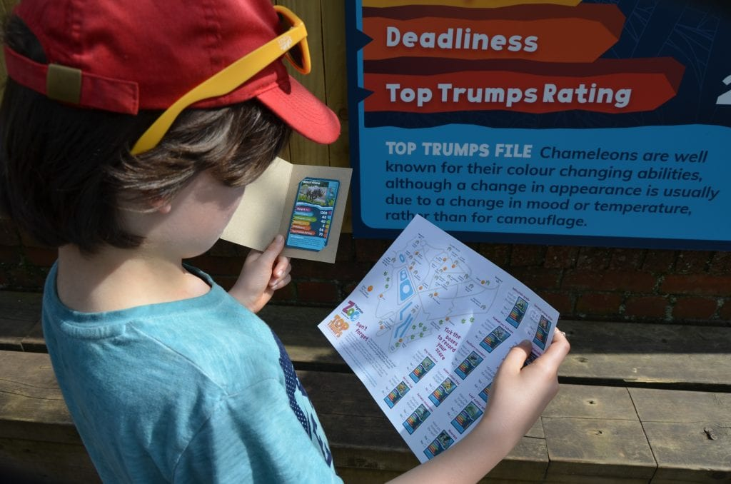 Playing Top Trumps at Paignton Zoo