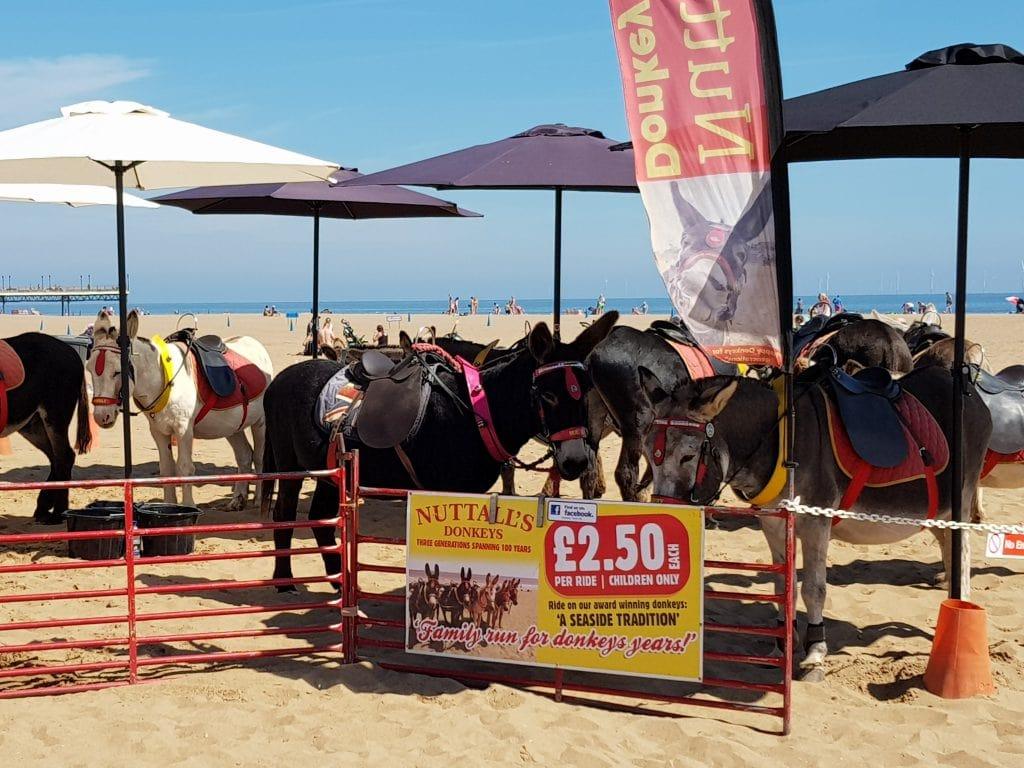 Donkey rides skegness beach