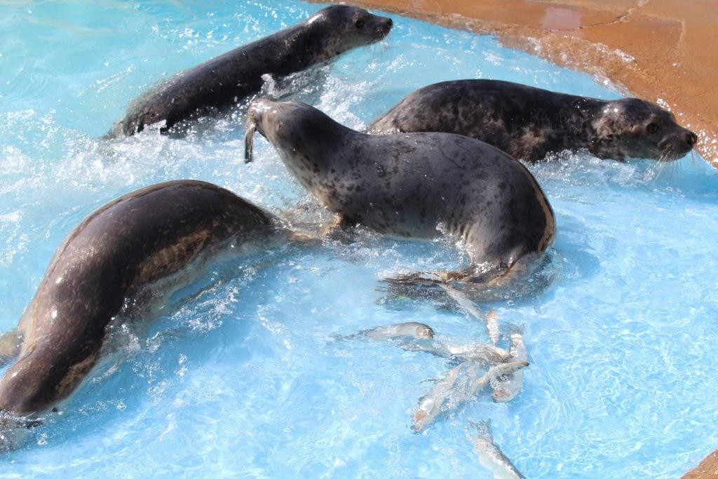 Natureland Seal Sanctuary