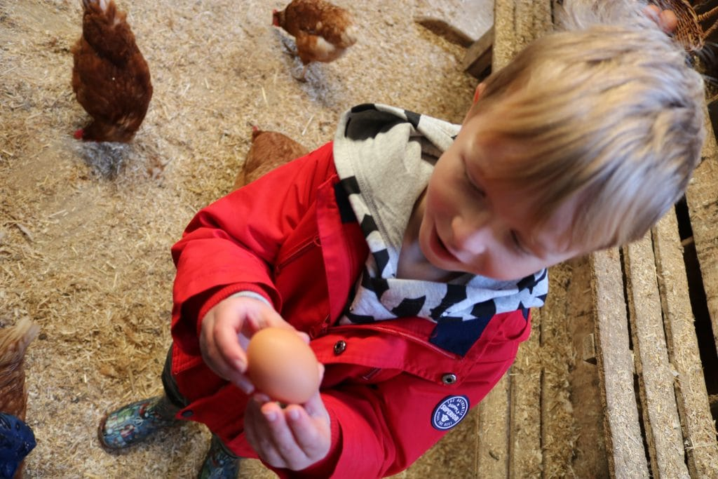 Helping to collect the eggs