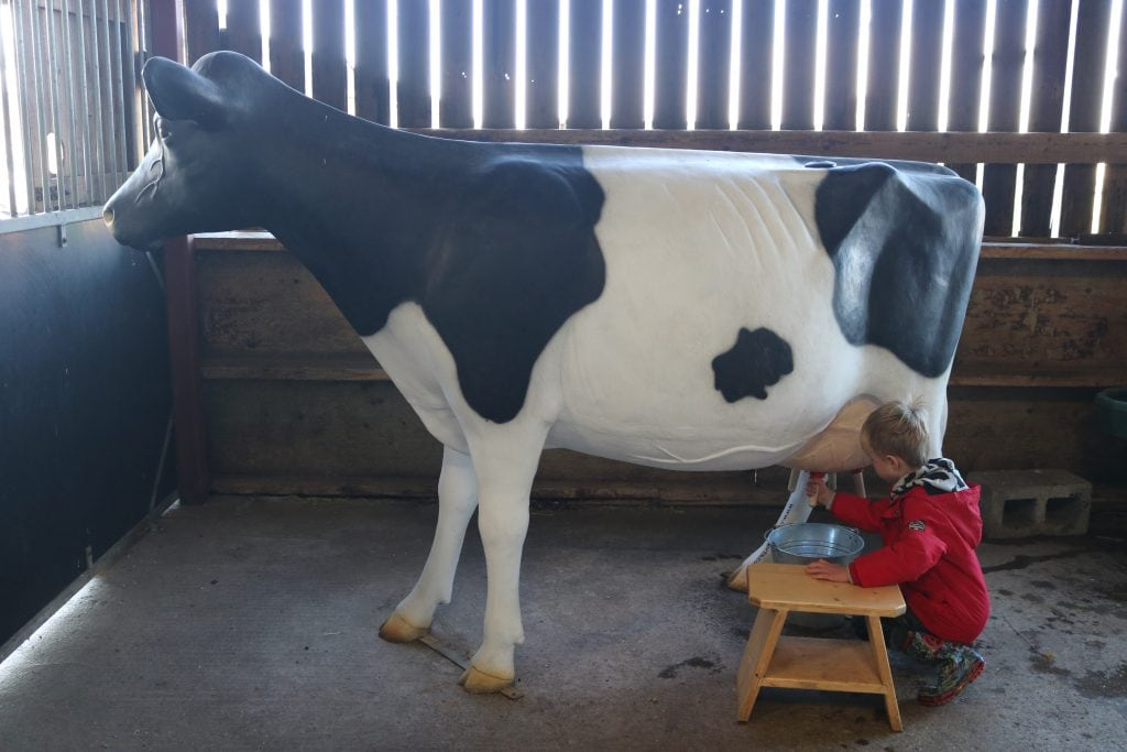 Milking the pretend cow