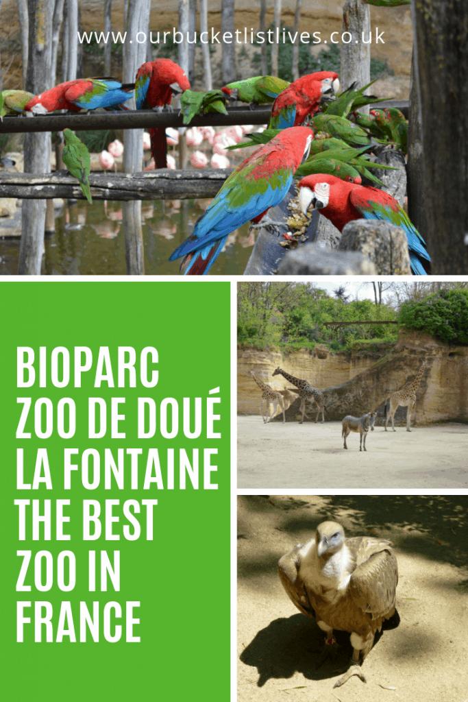 Bioparc - Zoo de Doué la Fontaine - The Best Zoo in France