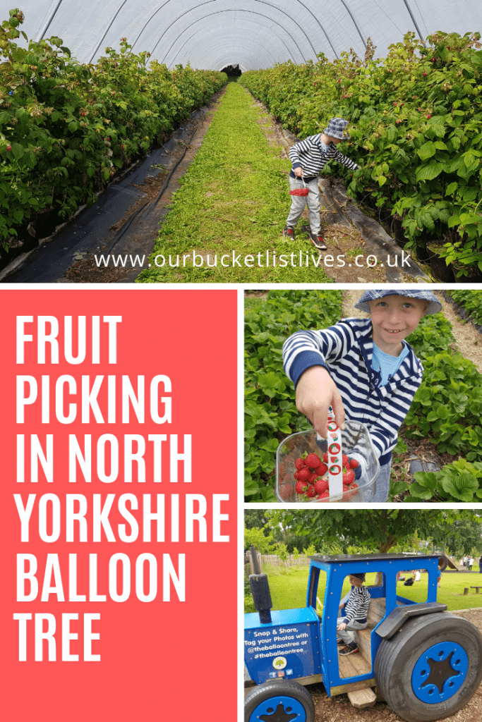 Fruit Picking in North Yorkshire | Balloon Tree Farmshop & Cafe