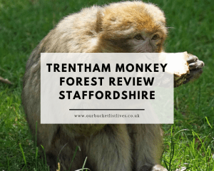 Trentham Monkey Forest | Family Day Out Review Staffordshire
