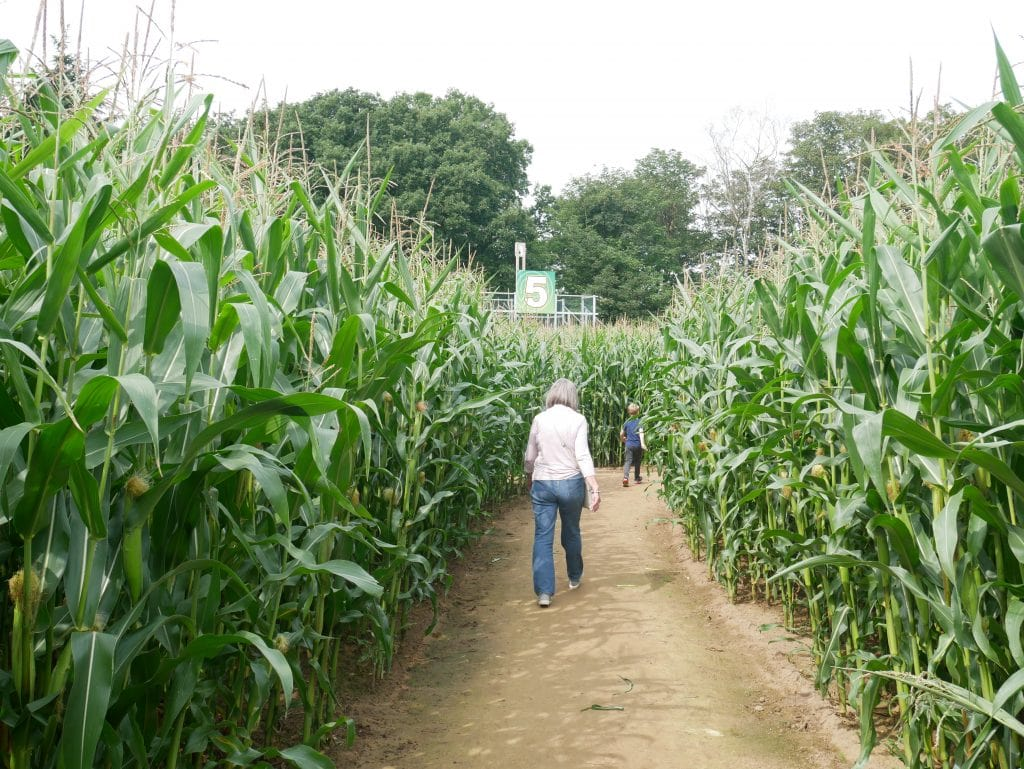 Walking around the maize maze
