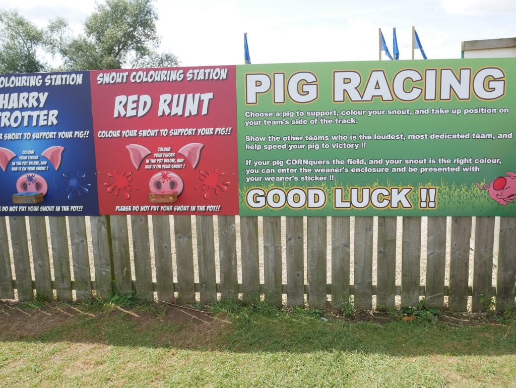 Pig racing at York Maze