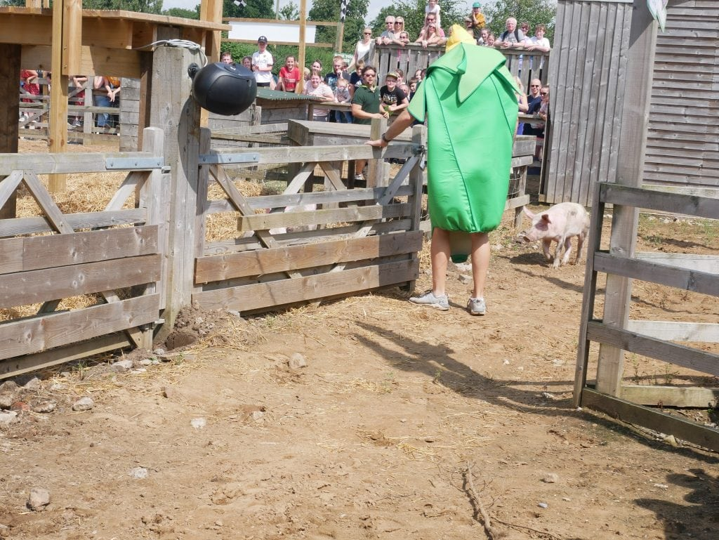 York Maze Family Summer Day Out Review