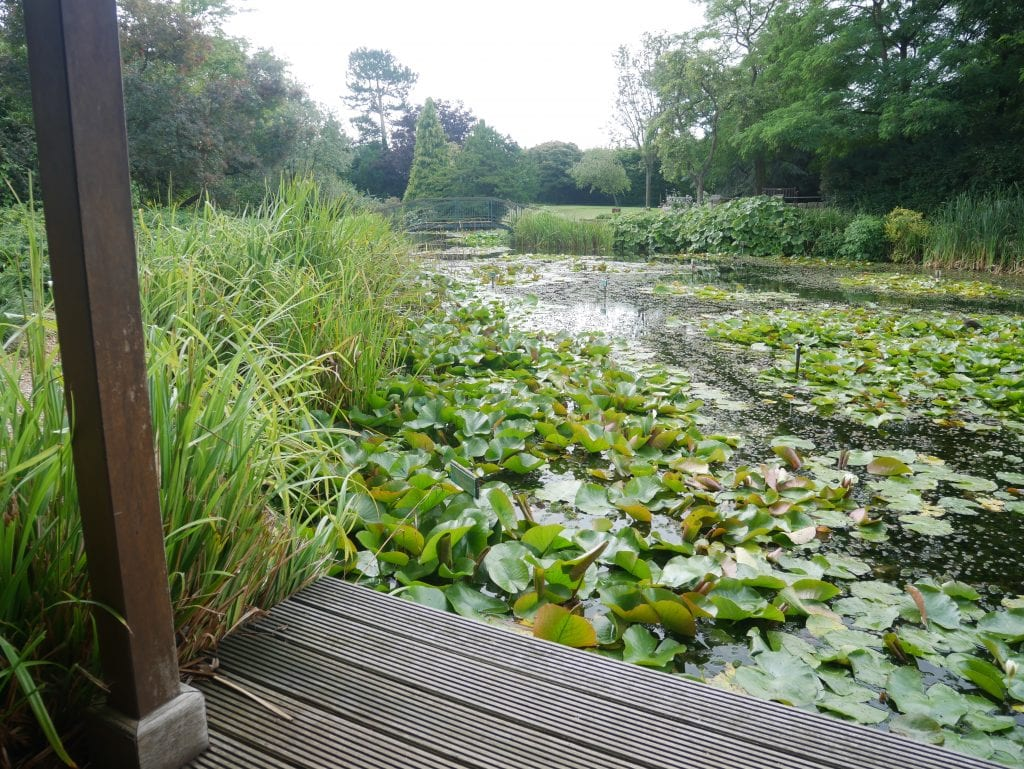 The smaller lily covered lake at Burnby