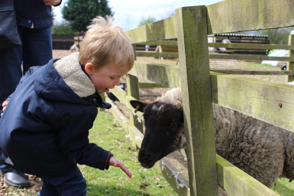 Featured image for Rushmoor Country Farm Park