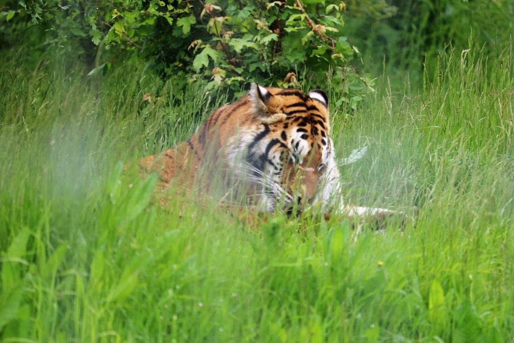 Featured image for Lincolnshire Wildlife Park