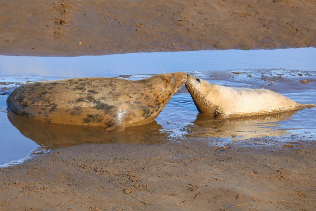 Thumbnail for Donna Nook Nature Reserve